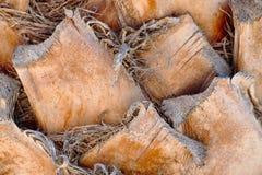De achtergrond van de palmboomstam, atural textuur Royalty-vrije Stock Foto's