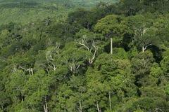 De achtergrond van de regenwoudwildernis stock foto's