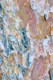 De Achtergrond van de Textuur van de schors Stock Fotografie