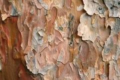 De Achtergrond van de Textuur van de schors Royalty-vrije Stock Foto's
