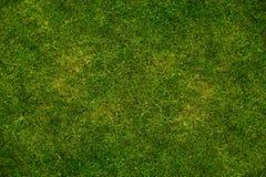 De Achtergrond van de Textuur van het gras Stock Fotografie