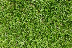De Achtergrond van de Textuur van het gras Stock Afbeeldingen