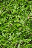 De Achtergrond van de Textuur van het gras Royalty-vrije Stock Afbeelding