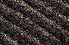 De achtergrond van de theeaanplanting Royalty-vrije Stock Foto