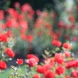De achtergrond van de tuin bokeh Stock Foto's