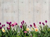 De achtergrond van de tulpengrens Stock Afbeeldingen