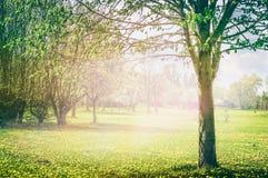 De achtergrond van de twijgaard in park of tuin met bloeiende fruitbomen Royalty-vrije Stock Afbeeldingen