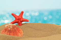 De achtergrond van de vakantie met zeeschelp en zeester Royalty-vrije Stock Foto