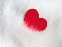 De achtergrond van de valentijnskaartendag met rood hart op wit kattenhaar De kaart van de Dag van valentijnskaarten Liefde en va Royalty-vrije Stock Afbeeldingen