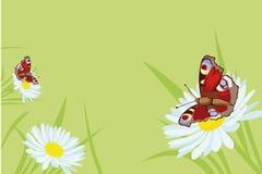 De achtergrond van de vlinder met bloemen Stock Fotografie