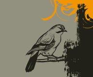 De Achtergrond van de vogel Stock Afbeeldingen