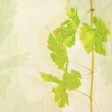 De achtergrond van de wijn Stock Afbeeldingen