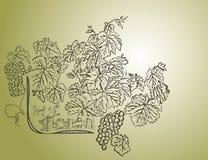 De achtergrond van de wijn Stock Foto's