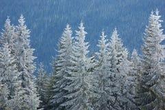 De achtergrond van de winter Stock Foto
