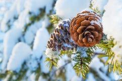 De achtergrond van de winter Stock Foto's