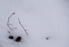 De achtergrond van de winter Sneeuw, gras, enz. Royalty-vrije Stock Fotografie