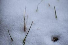 De achtergrond van de winter Sneeuw, gras, enz. Royalty-vrije Stock Afbeeldingen