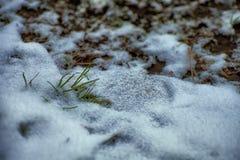 De achtergrond van de winter Sneeuw, gras, enz. Royalty-vrije Stock Foto