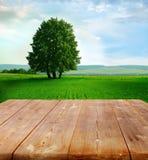 De achtergrond van de zomer Royalty-vrije Stock Fotografie