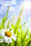 De achtergrond van de zomer met bloemen in gras royalty-vrije stock afbeelding