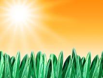 De achtergrond van de zomer met gras Stock Afbeelding