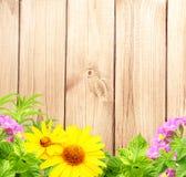 De achtergrond van de zomer Royalty-vrije Stock Afbeelding