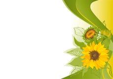 De achtergrond van de zomer met zonnebloemen Royalty-vrije Stock Fotografie