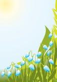 De achtergrond van de zon Stock Foto