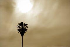 De Achtergrond van de zon en van de Palm Stock Foto's