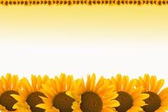 De achtergrond van de zonnebloem royalty-vrije illustratie