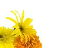 De achtergrond van de zonnebloem en van de goudsbloem Stock Foto