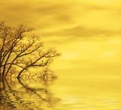 De achtergrond van de zonsondergang Royalty-vrije Stock Afbeeldingen
