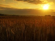 De achtergrond van de zonsondergang bewolkte oranje hemel Het plaatsen van zonstralen op horizon in landelijke weide Royalty-vrije Stock Afbeelding