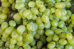 De achtergrond van druiven Stock Foto