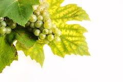 De achtergrond van druiven Royalty-vrije Stock Afbeeldingen