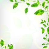 De Achtergrond van Eco Royalty-vrije Stock Fotografie
