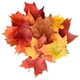 De achtergrond van de esdoornbladeren van de herfst Beeld dat met speciale lens wordt gemaakt Royalty-vrije Stock Foto