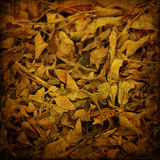 De achtergrond van Grunge met bladeren Stock Afbeelding