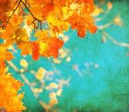 De achtergrond van Grunge met de herfstbladeren