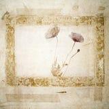 De Achtergrond van Grunge met papaverbloesems stock afbeeldingen