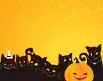 De achtergrond van Halloween met zwarte katten en pompoen. Royalty-vrije Stock Foto's