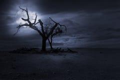De achtergrond van Halloween nght Stock Afbeelding