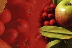 De achtergrond van de herfst Rode en oranje het bladclose-up van de kleurenKlimop Apple en rode bessen van lijsterbesclose-up Stock Afbeeldingen
