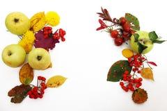 De achtergrond van de herfst Rode en oranje het bladclose-up van de kleurenKlimop Kleurrijke bladeren, appelen en rode bessen Royalty-vrije Stock Afbeeldingen