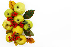 De achtergrond van de herfst Rode en oranje het bladclose-up van de kleurenKlimop Kleurrijke bladeren, appelen en rode bessen Royalty-vrije Stock Afbeelding