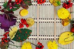 De achtergrond van de herfst Rode en oranje het bladclose-up van de kleurenKlimop Kleurrijke bladeren en rode bessen Royalty-vrije Stock Foto