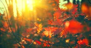 De achtergrond van de herfstbladeren, achtergrond Landschap, Bladeren die in een boom in herfstpark slingeren Daling Droge kruide royalty-vrije stock afbeelding