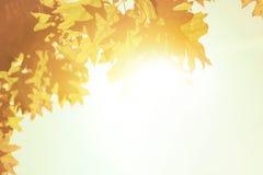 De achtergrond van de herfstbladeren over ochtendzonlicht stock foto