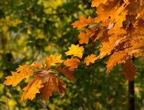 De achtergrond van de herfstkleuren royalty-vrije stock afbeelding