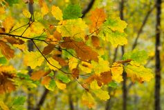 De achtergrond van de herfstkleuren stock afbeelding